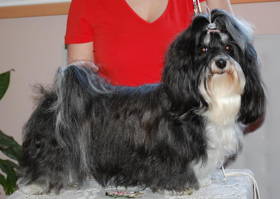 Lara Dog Kennel
